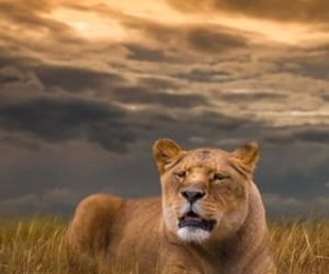 animals, beautiful, and clouds image