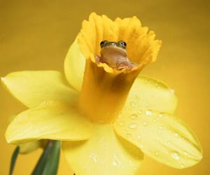 frog and flowers image
