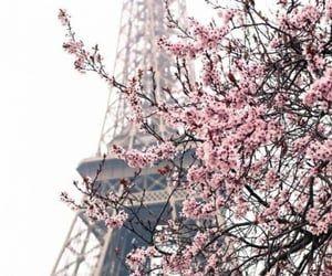 flower, paris, and pink image