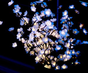 light, flowers, and blue image