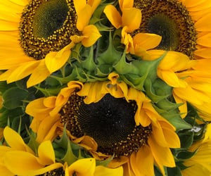 beauty, sunflowers, and love image