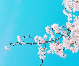 background, flowers, and blue image