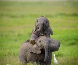 animal, elephant, and baby image