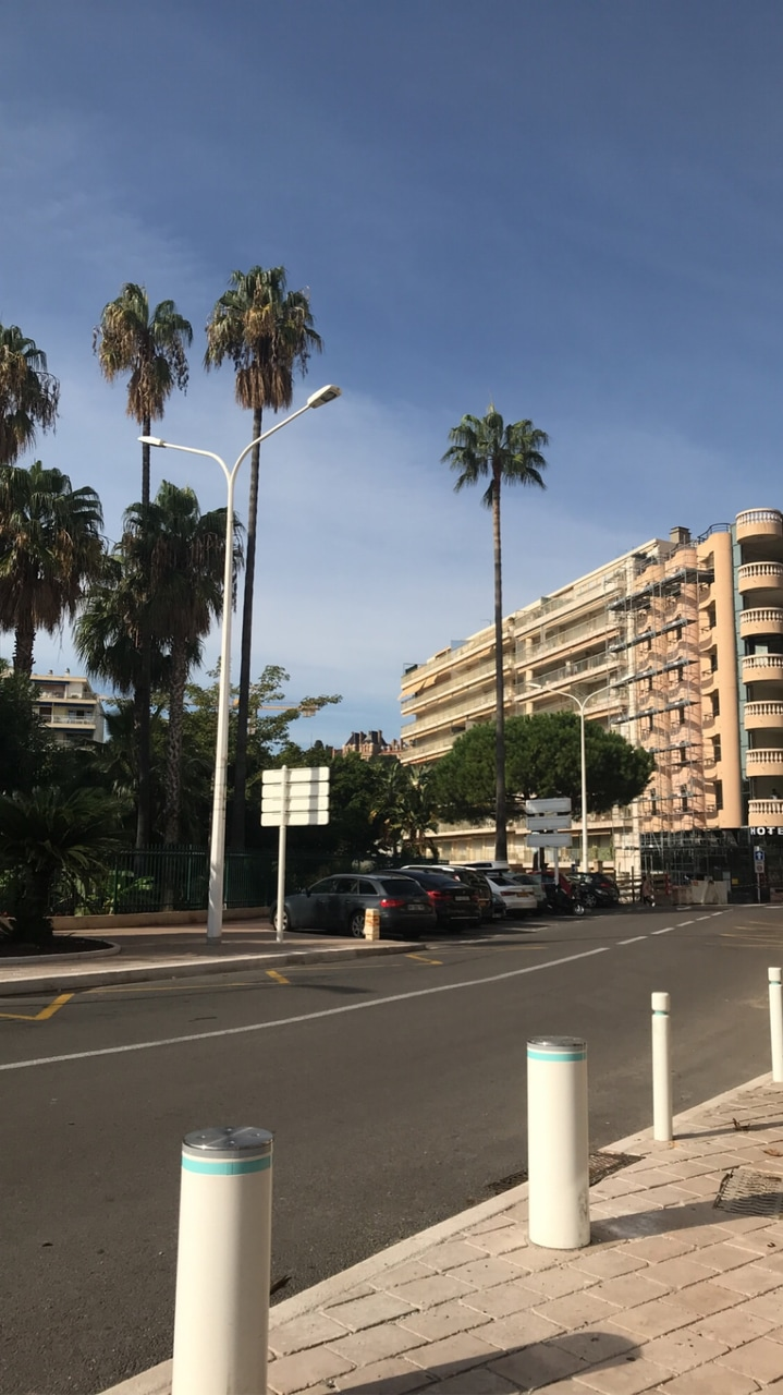 cannes, french, and palmiers image