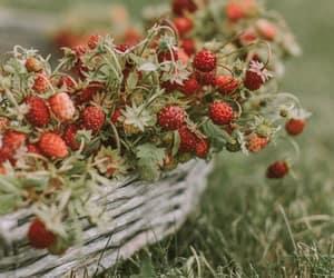basket, photo, and strawberries image