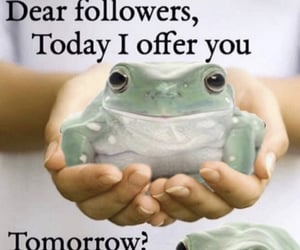 aesthetic, frogs, and meme image