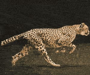 africa, cheetah, and nature image