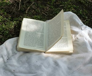 aesthetic, book, and forest image