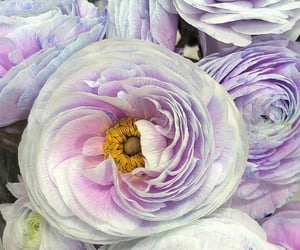 flores, flowers, and lilac image