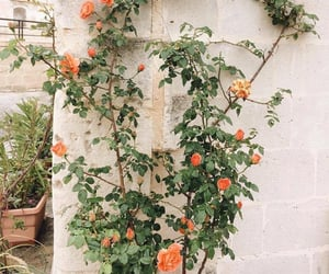 beauty, orange, and pretty image