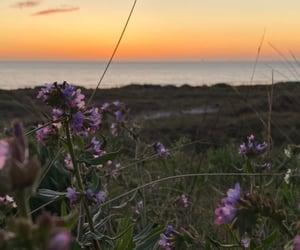 flowers, sea, and sun image