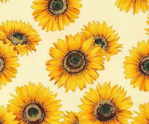 sunflower, pattern, and wallpaper image