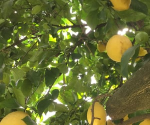 citron, ete, and green image