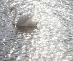 Swan, white, and aesthetic image