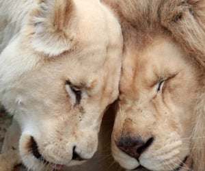 aesthetic, beige, and lions image