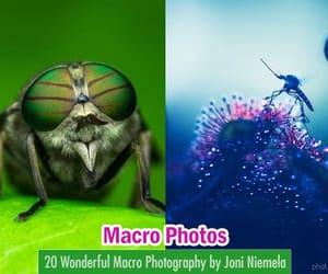 6, macro photography, and photography image