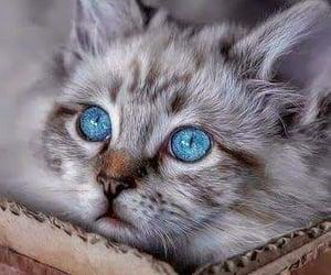 animals, background, and beautiful image