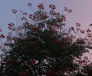 aesthetics, red, and evening image