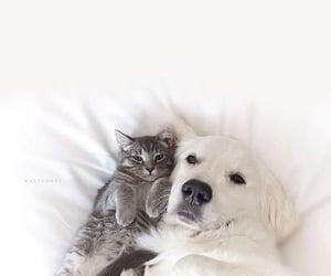 animals, cat, and photo image