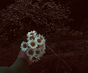 bouquet, daisy, and memory image