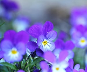 flower, flowers, and mood image