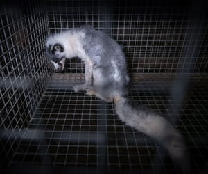 abuse, animal cruelty, and cage image