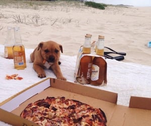 dog, beach, and food image