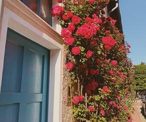 beautiful, boho, and rose image
