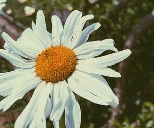 beautiful, boho, and daisy image