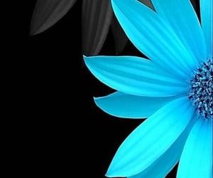 flores and fondo image