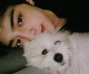 dog, leader, and seungcheol image