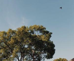 bird, blue, and Sunny image