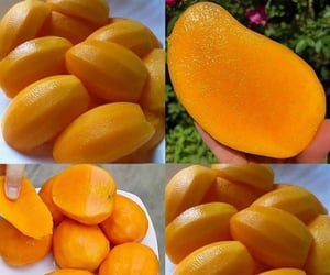 the king of fruits and mango my favorite fruit image