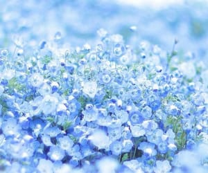 blue, flowers, and nature image