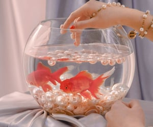 aesthetic, fishes, and goldfish image