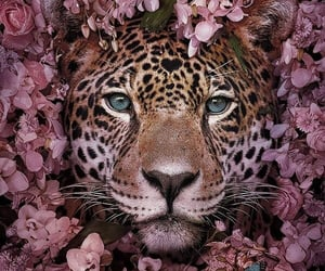 animal, flowers, and leopard image