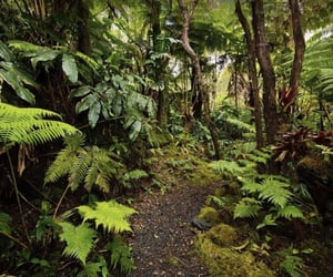 ferns, moss, and pathway image