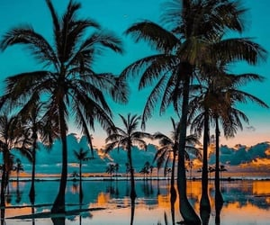 blue, holiday, and palm trees image