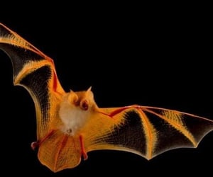 adorable, Halloween, and orange image