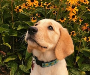 dog, flowers, and animals image