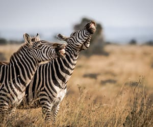 adorable, wild animals, and wildlife photography image