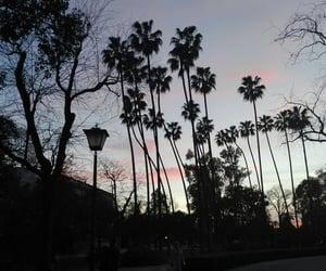 amazing, palmtree, and trip image