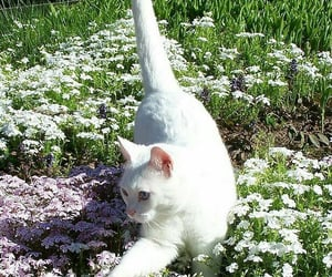 animal, aesthetic, and cat image