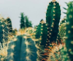 wallpaper, kaktus, and duvarkağıdı image