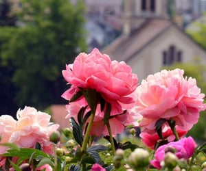 church, flower, and flowers image