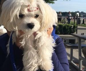 dog, fluffy, and luxury image