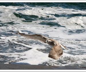 happiness, life, and sea image