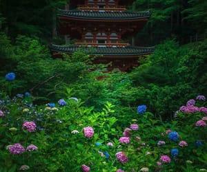flower, japan, and instagram image