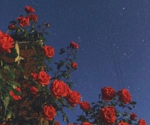 roses, aesthetic, and flowers image