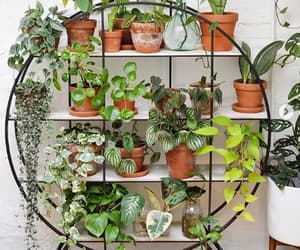 house, succulents, and decoration image